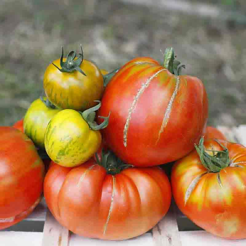 TOMATE ANCIENNE 1KG