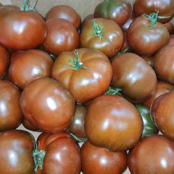TOMATE RONDE NOIRE 500G